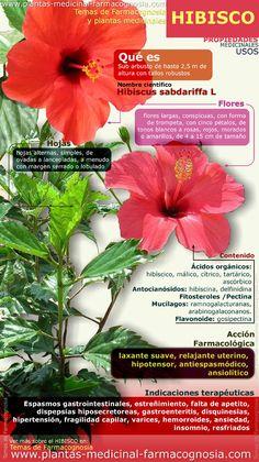 Propiedades del Hibisco. Infografía. Resumen de las características generales de la planta de Hibisco. Propiedades, beneficios y usos medicinales más comunes del Hibisco. http://www.plantas-medicinal-farmacognosia.com/productos-naturales/hibisco-propiedades/beneficios-infografia/