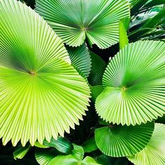 Photos and Videos House Plants, Plant Leaves, Photo And Video, Videos, Photos, Instagram, Home Plants, Houseplants, Foliage Plants