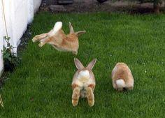 bunny bunny!