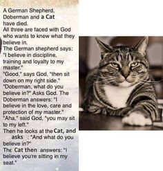 Cats are God - Funny Cat Quotes Cat Jokes, Funny Animal Memes, Animal Quotes, Funny Animal Pictures, Funny Cats, Funny Animals, Cute Animals, Funny Cat Quotes, Silly Cats