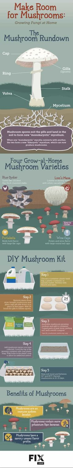 Did you know growing Mushrooms at home is possible? Not just that but easy and inexpensive too. This infographic will let you know! | https://homesteading.com/growing-mushrooms-at-home/