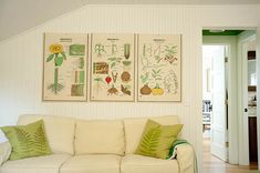 """We found the vintage botanical school charts in Hudson,"""" Ted KW says. """"No frames, just simple, silver-headed push pins. The sofa [is] a good napping spot on a rainy day."""" (The pillows are by Ox Bow Décor)"""