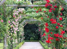 climbing plants Climbing Hydrangea, Climbing Vines, Fast Growing Vines, Autumn Clematis, How To Attract Hummingbirds, Sun And Water, Small Space Gardening, Flowering Vines, Seed Pods