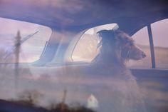 ถ่ายหมาแนวหว่อง The Silence Of Dogs In Cars By Martin Usborne | Yatzer