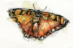 """Orange Garden Butterfly  4""""x6"""" Original Small Watercolor Art Painting India ink, watercolour paint, Tombow markers.   http://www.etsy.com/shop/AbbyDiamondDraws"""