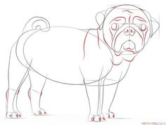How to draw a pug dog | Step by step Drawing tutorials