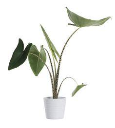Ikebana, Bonsai, Plant Leaves, Plants, Bonsai Trees, Bonsai Plants, Flora, Plant, Flower Arrangements