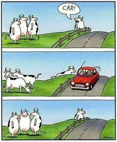 Car!  by Gary Larson