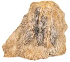 Matted Dog? Ten Tips for Removing Mats from your long haired dog's Coat