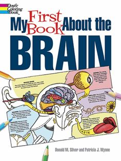 Winner of a Bronze 2014 Moonbeam Children's Book Award! How does the brain control the rest of the body? Twenty-five illustrations explain every aspect of the brain's important jobs, from communicating with the central nervous system to retaining memories.