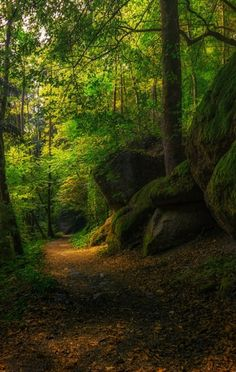 by Kristina Wilson) [forest path] Beautiful World, Beautiful Places, Beautiful Pictures, Foto Nature, Somewhere Only We Know, Mystical Forest, Forest Path, Misty Forest, Walk In The Woods