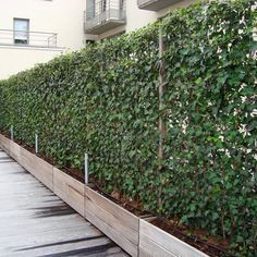 Another option for climbing plants is to use the evergreen English ivy. These living fences from 'Impact Plants' give you year round privacy screens with an English garden look.