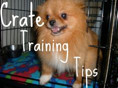 Crate train your dog #pomeranian #crate training