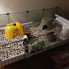 DIY guinea pig cage, using storage cubes, and fleece as substrate. Can customize to any size/shape.