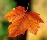 """Don't you love autumn when the leaves start to turn and eventually just """"Fall"""""""