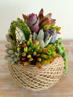 Unique Kokedama Ball Ideas for Hanging Garden Plants - Home Decor Ideas Succulents In Containers, Cacti And Succulents, Planting Succulents, Cactus Plants, Planting Flowers, Succulent Gardening, Succulent Terrarium, Container Gardening, Dish Garden