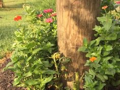 Flowers by telephone pole
