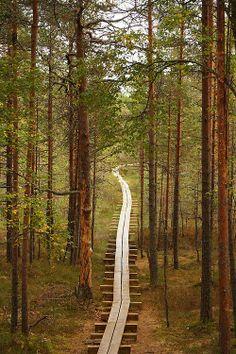 Wooden Boardwalk, Harjumaa, Estonia Forest /   Wonderful Places In The World