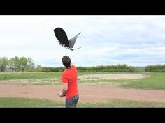 ▶ The Amazing Ornithopter: SK Slow Hawk - YouTube