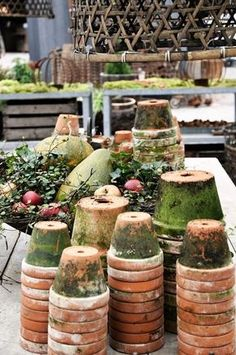 aged terracotta pots covered with moss. aged terracotta pots covered with moss. Garden Shop, Garden Pots, Container Plants, Container Gardening, Potting Tables, Pot Plante, Potting Sheds, Clay Pots, Garden Inspiration