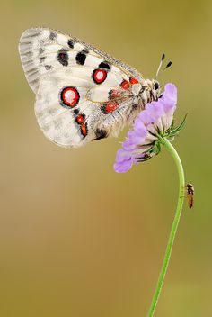 graphic spots #butterfly