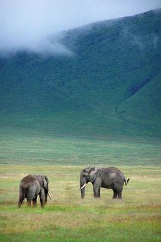 Elephants in Ngorongoro Crater by (geoftheref)