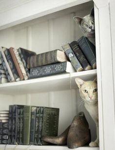 """""""Books and cats and fair-haired little girls are the best furnishings for a room."""" --French Proverbs"""