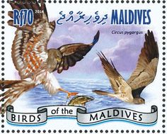 Montagu's Harrier stamps - mainly images - gallery format