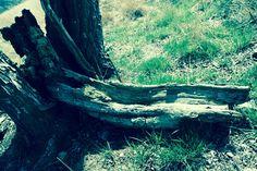 Wald & Wiese