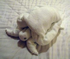 folded towel turtle