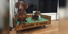 Dachshund Crafts to Make Funny Dachshund, Dachshund Puppies, Weenie Dogs, Dachshund Love, Cute Puppies, Cute Dogs, Daschund, Doggies, Baby Animals