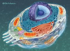 BIOLOGY ART by Bill Melvin, via Behance