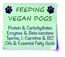 Vegan Nutrition: Sources of Vitamins and Minerals
