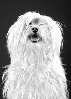 100 Adorable Examples of Pet Photography - From Extreme Dog Captures to Pet Portrait Lookbooks
