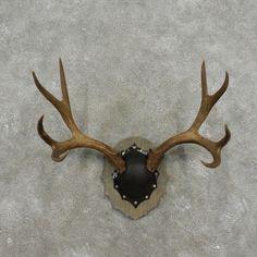 Vintage Deer Antler Mount Plaid Christmas Decor By