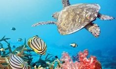 The amazing coral reefs in this photo gallery. I choose the most beautiful coral reef scenes and the best coral reef views for you. You will like these coral reef images, because they are really great. Sea Turtle Wallpaper, Animal Wallpaper, Great Barrier Reef Australia, Underwater Wallpaper, Underwater Background, Wallpapers En Hd, Desktop Backgrounds, Tier Wallpaper, Room Wallpaper