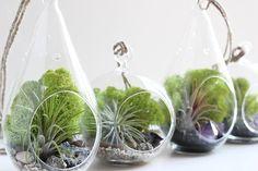 air plants - Google Search