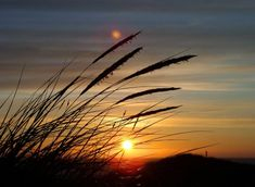 """""""Encuentra el éxtasis de la vida; la mera sensación de vivir es alegría suficiente"""" -Emily Dickinson- :http://www.surferrule.com/surf-y-olas-480/"""