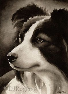 BORDER COLLIE Sepia Art Print Signed by Watercolor Artist DJ Rogers by k9artgallery on Etsy https://www.etsy.com/listing/173997211/border-collie-sepia-art-print-signed-by