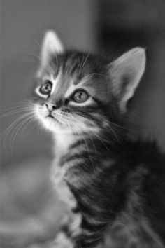 Black and white photography perfectly captures the innocence of this kitten.