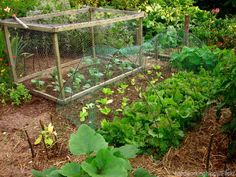 7 Steps To Create A Permaculture Garden - Photo by hardworkinghippy/Flickr (UrbanFarmOnline.com)