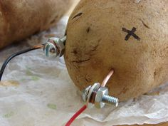 The potato battery: the question is, can potatoes supply ALL our power needs?
