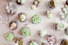succulents in glass. UPCYCLE. love! need to have them start saving Virginias baby food containers NOW.  Simply Bloom Photography