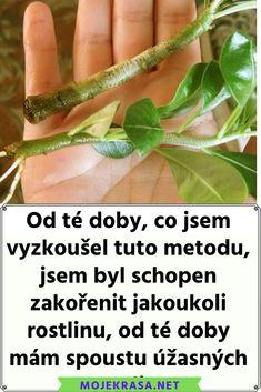 Máme tady jaro, které je ideální dobou na pěstování a sázení rostlinek. Pokud jste vášnivým zahradníkem, pak jistě máte své triky a víte, jak sázet a o rostlinky se starat. Jste-li ovšem začátečník, jistě oceníte radu, která vám pomůže zasadit mnoho rostlinek. Radu ocení také ti, kteří by si rádi zasadili nějakou jinou rostlinu, ale neví, jak na to. S touto metodou totiž budete schopní zasadit téměř cokoliv. Díky speciální technice rostlinka krásně zakoření a rychle začne růst a dělat vám… Outdoor Garden Bench, Garden Club, Garden Inspiration, Bonsai, Flora, Herbs, Plants, Vegetables, Lawn And Garden