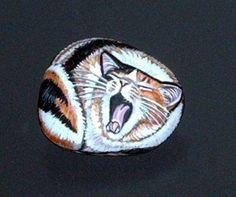 yawning rock kitty