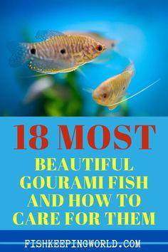 Best Aquarium Fish, Tropical Fish Aquarium, Aquarium Setup, Saltwater Aquarium, Aquarium Ideas, Fish Tank Themes, Fish List, Fishing For Beginners, Pet Fish