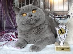 nternational Cat Shows Karlovy Vary * CZ , today 15,4,2017 Our lovely boy Jade Heart of Last Hope <3 Class 11.<3 <3 <3 EX 1, Best in Variety Total and nom.BIS and our young Little Angel <3 Class 12, EX 1 <3 <3 <3