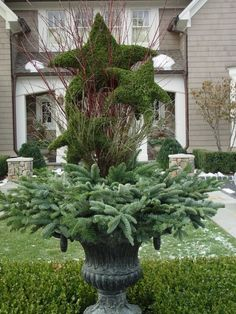 Winter container, star topiaries