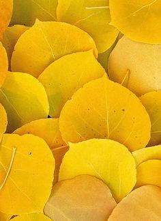 sunny yellow .. X ღɱɧღ ||