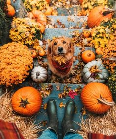 64 Super ideas for dogs golden retriever puppies animals Cute Puppies, Cute Dogs, Dogs And Puppies, Doggies, Retriever Puppy, Dogs Golden Retriever, Golden Retrievers, Autumn Photography, Animal Photography
